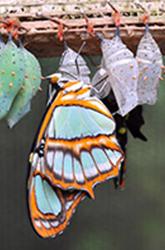 vlinderK